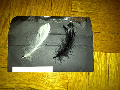 nina-sayers-feathers.jpg