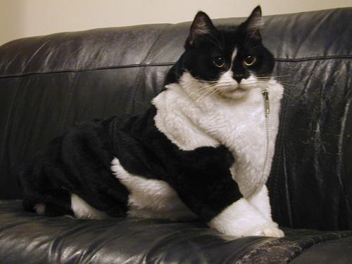 roonie-fur-suit.jpg