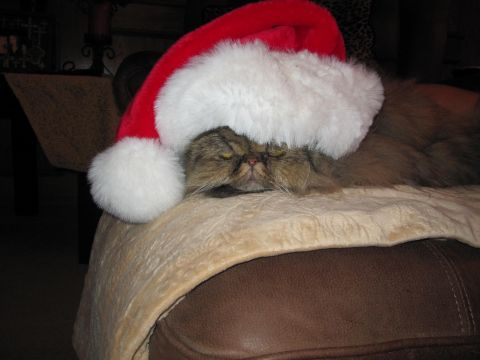 Santa_kitty.jpeg