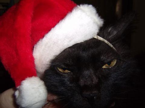 Santa_kitty2.JPG