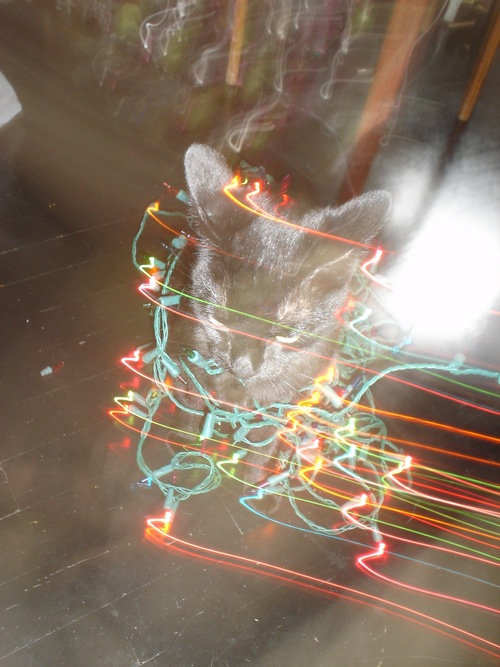 grappa-cat-christmas-lights-02.JPG
