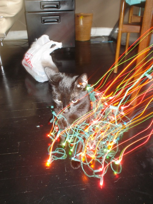 grappa-cat-christmas-lights-03.JPG
