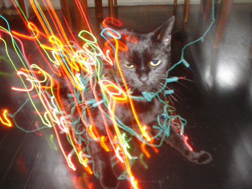 grappa-cat-christmas-lights.JPG