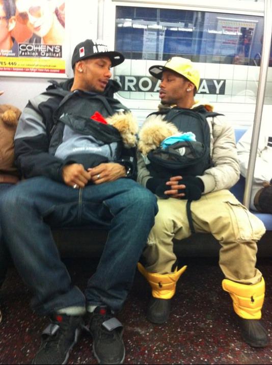 Omg How Cute Doggie Subway Mobility Omg Blog