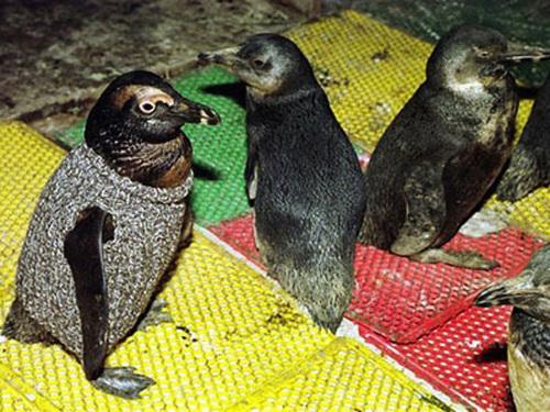 penguin-sweaters-02.jpg