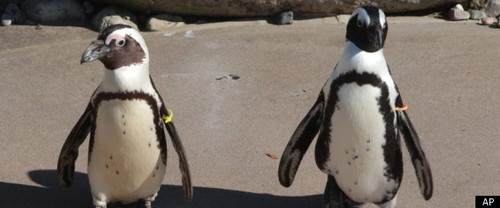 r-GAY-PENGUINS-REUNION-large570.jpg