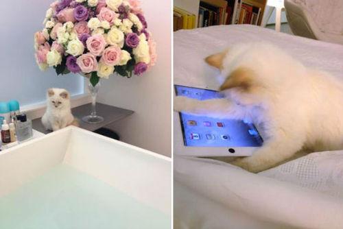 Karl-Lagerfeld-cat-Choupette-Lagerfeld-Twitter.jpg