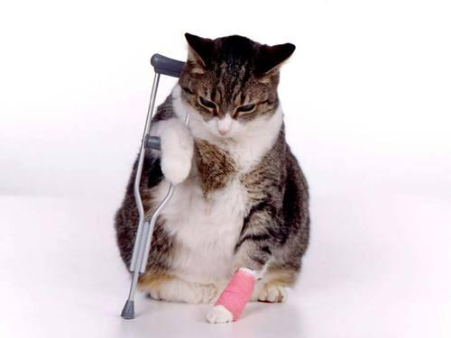 cat_sick_kitten.jpg