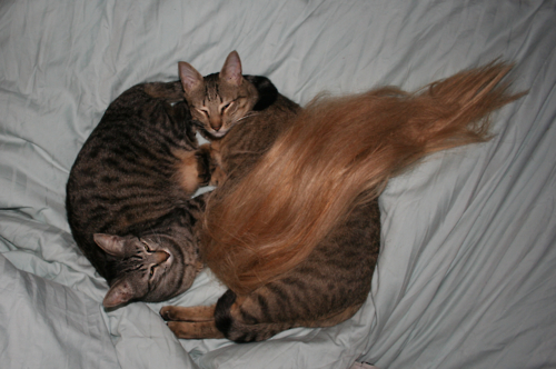 kitties_hair.jpg