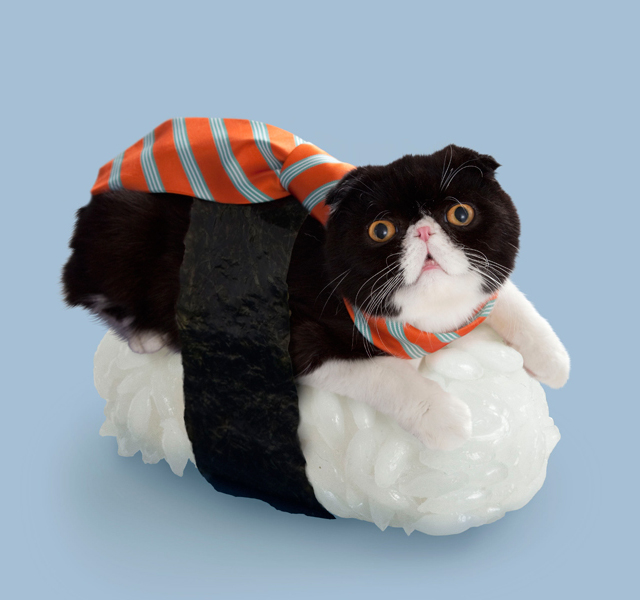 Kittens In Costumes Sushi Cat Cat Dressed Up Funny Cats Hug Your Cat Day Cat Dresses Cat Art Crazy Cat Lady Crazy Cats Forward Sushi Cats or (Neko-Sushi) by the Japan-based company Tange & Nakimushi Peanuts is a funny series of photographs of cute felines resting on top of sushi rice.