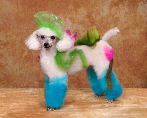 Crazy-Dog-Grooming-Compet-002.jpg