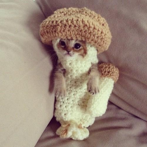 mush_cat.jpg