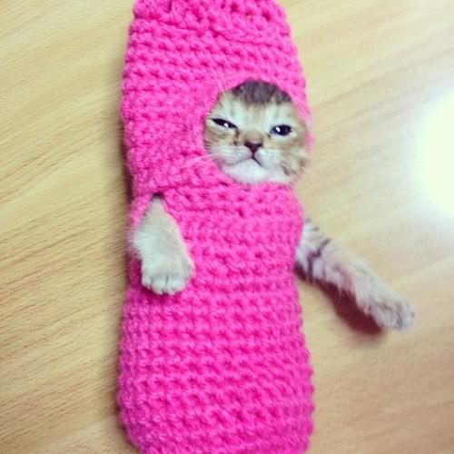 mush_cat_.jpg