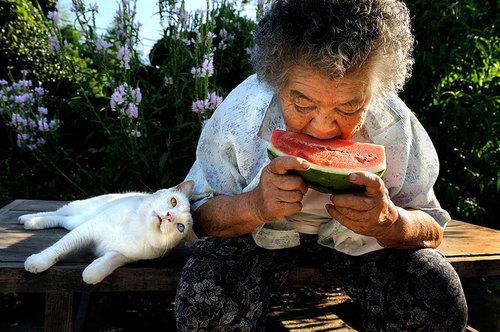 grandma-odd-cat-06.jpg