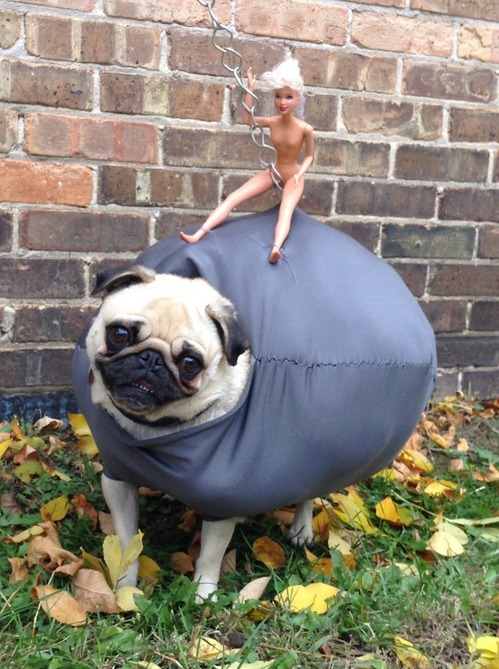 pug-wrecking-ball.jpg