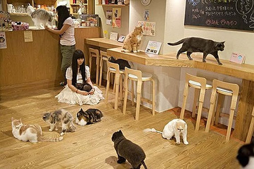 570x379xcat-cafe.jpg.pagespeed.ic.JUgS_VE7nN.jpg