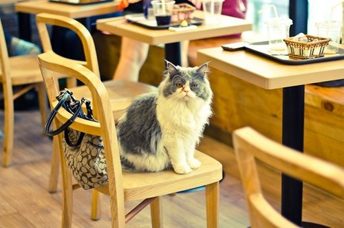 646x430xcatcafe3.jpg.pagespeed.ic.HZ-H9kCQwR.jpg