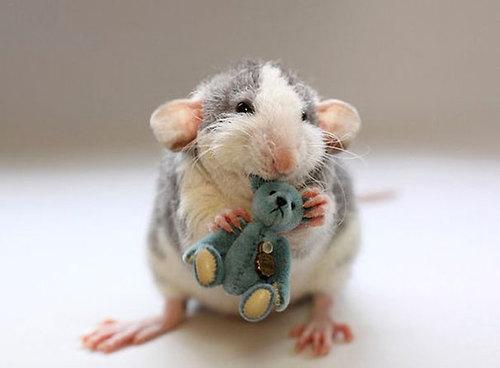 Rats-with-Teddy-Bears-15.jpg