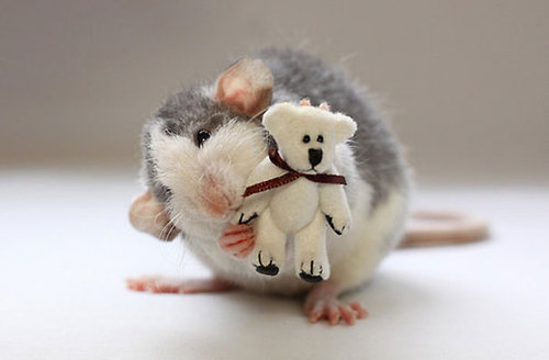 Rats-with-Teddy-Bears-16.jpg