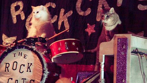 rockcats2.jpg