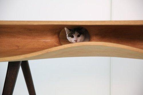 cat3.jpg.650x0_q85_crop-smart.jpg