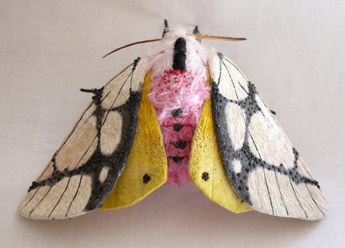 yumi-okita-moths-06.jpg