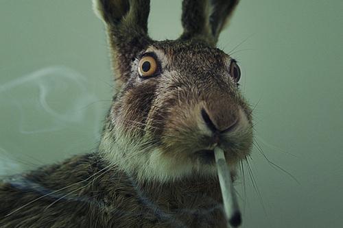 rabbit-stoner.jpg