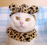 cat-leopard-tn.jpg