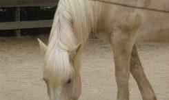 coulter-horse.jpg