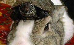 oolong-turtle.jpg