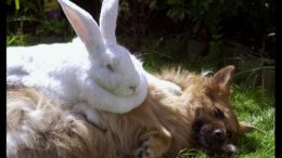 rabbit-dog.jpg