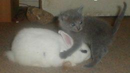 kitten-bunny-thumb.jpg