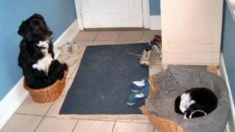 cat-dog-basket.jpg