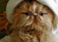 butterscotch-osama.jpg