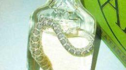 rattlesnake-vodka.jpg