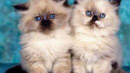 kitten-friends-thumb.jpg