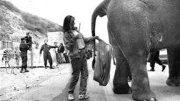 elephant234234-thumb.jpg