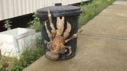 coconut_crab-thumb.jpg
