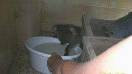 koala01-thumb.jpg