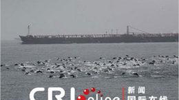 15lede_dolphins.480-thumb.jpg