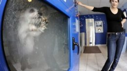 dogwash-thumb.jpg