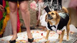 woofstockwedding_15-thumb.jpg