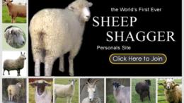 sheepshagger-thumb.png