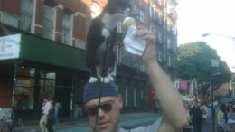 cat-ice-cream-new-york-thumb-450x337-9.jpg