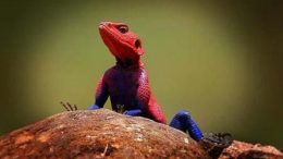 spiderlizard-thumb-450x281-162.jpg