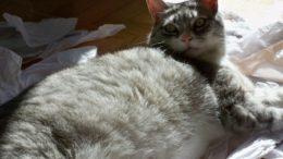 anderson-pooper-chubby-sunlight-thumb-450x337-641.jpg