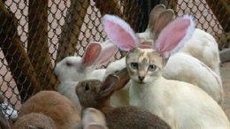 flock-cabbit.jpg