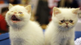 kitties-thumb-500x322-1260.jpg