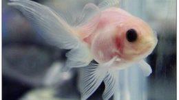 transparentfish-thumb-500x369-1334.jpg