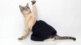 united-bamboo-cat-calendar-2-thumb-500x333-1226.jpg